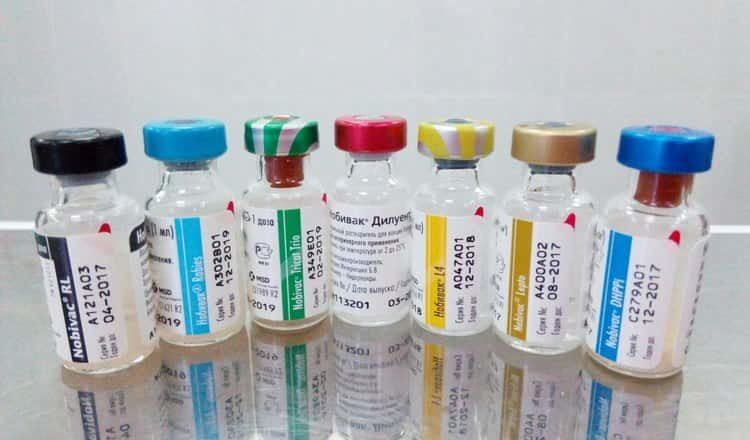 чем вакцинировать йорка