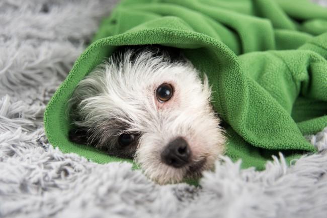 дельцид для собак