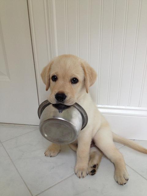 крупа для собаки
