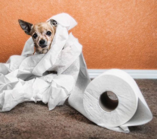 лечение поноса у собак