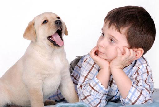 собака ревнует к ребенку