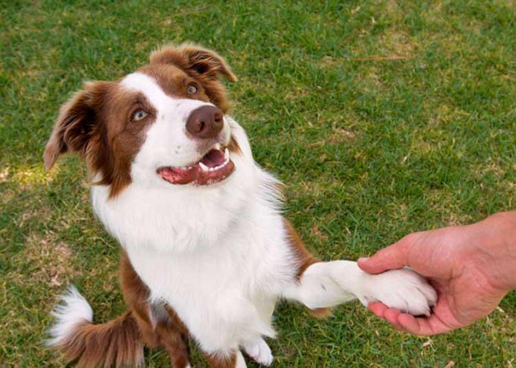 Фиприст для собак цена