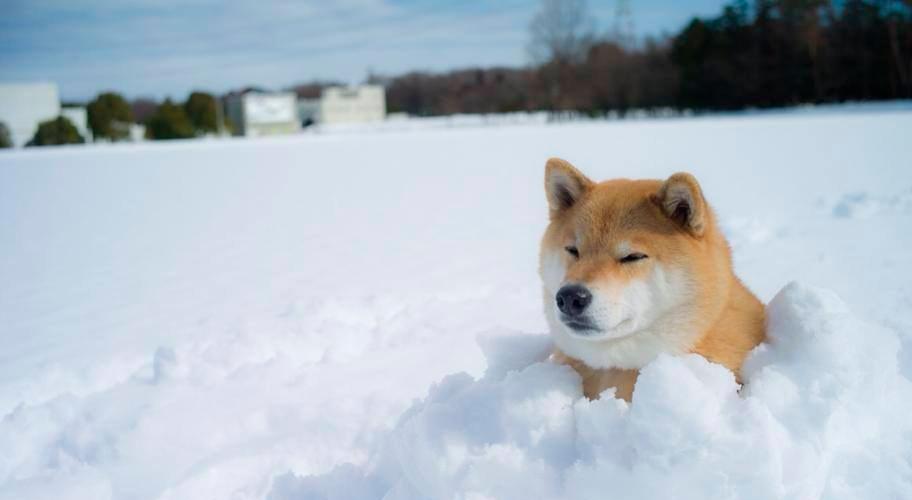 Фиприст для собак побочные дейсвия