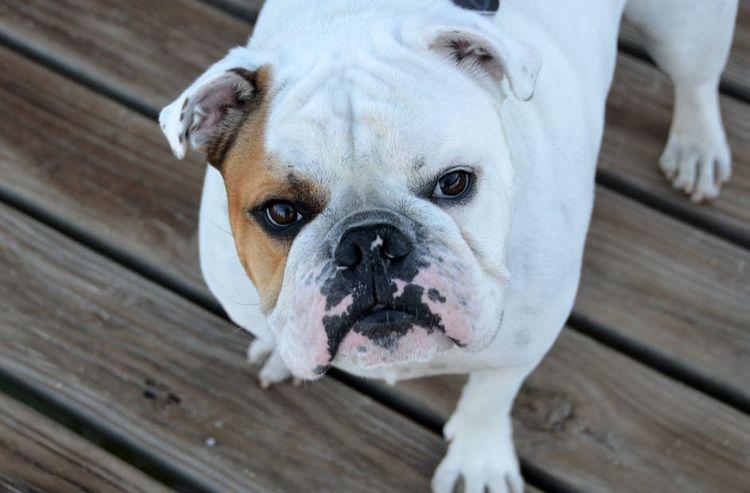 Хелавит для собак дозировка