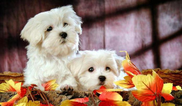 Хелавит для собак цена