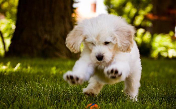 Хелавит для собак показание к примененению