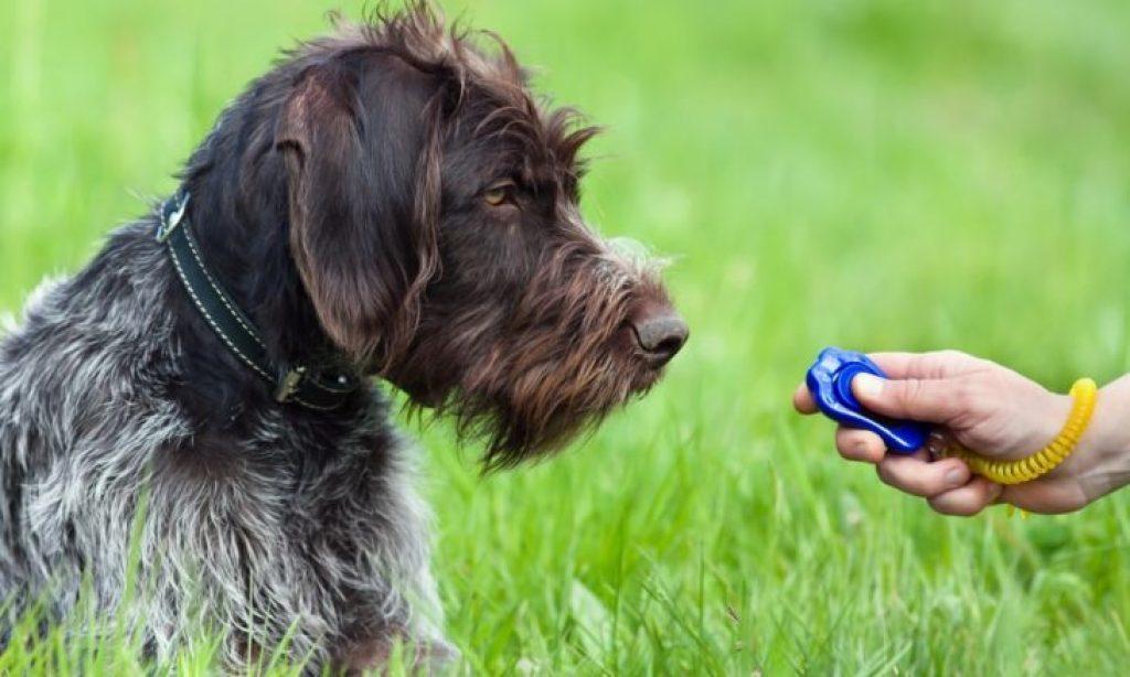 делаем кликер для собак
