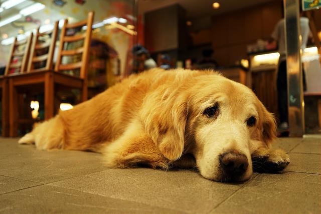 пробиотики для собак назначение