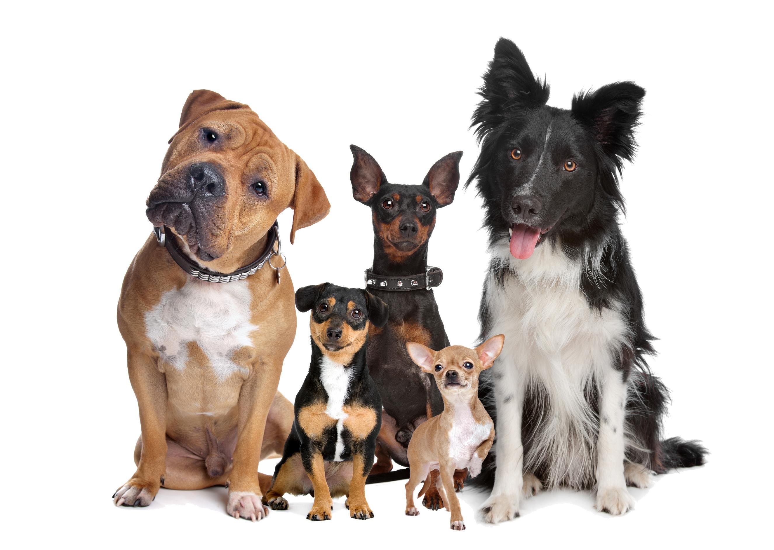 выбираем пробиотики для собак