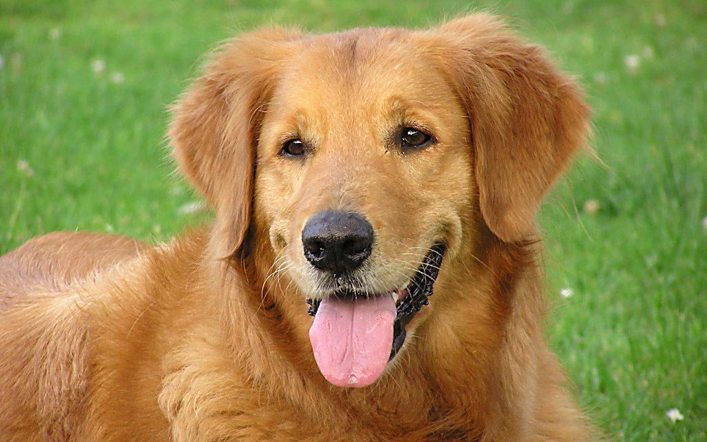пробиотики для собак цена