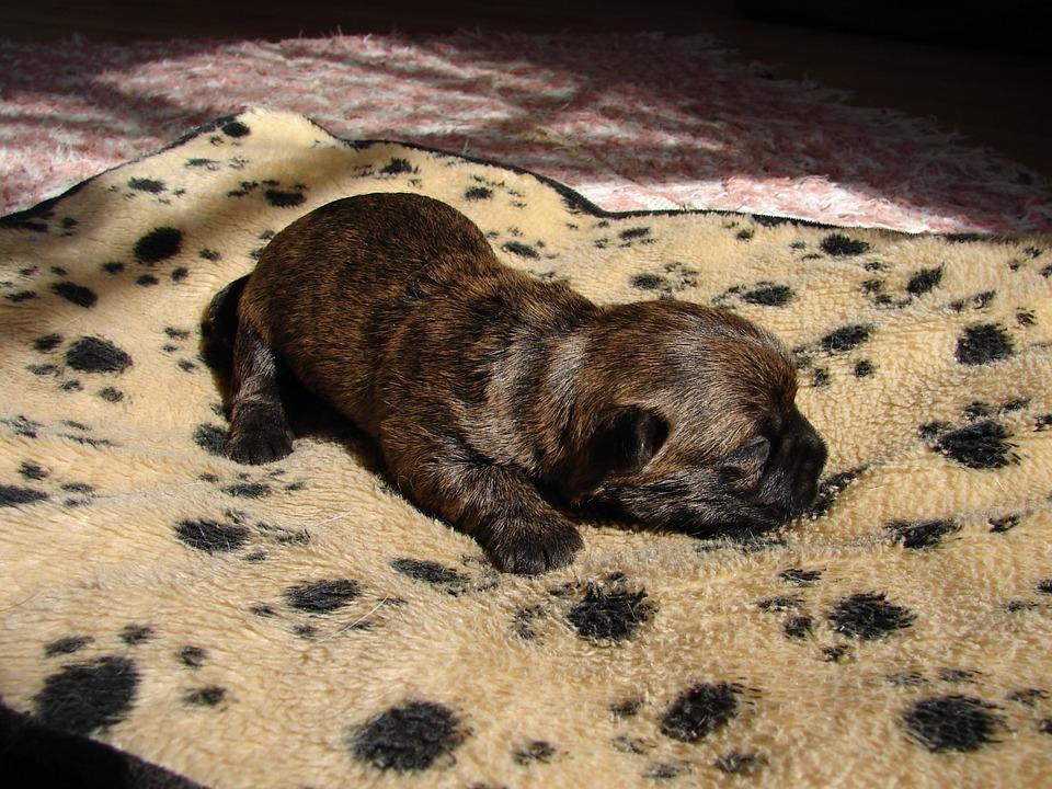 сколько спит щенок