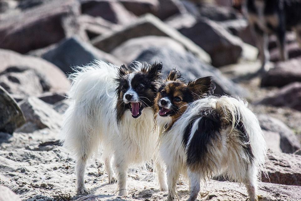 Разные выделения из петли у собаки: нормальные и патологические