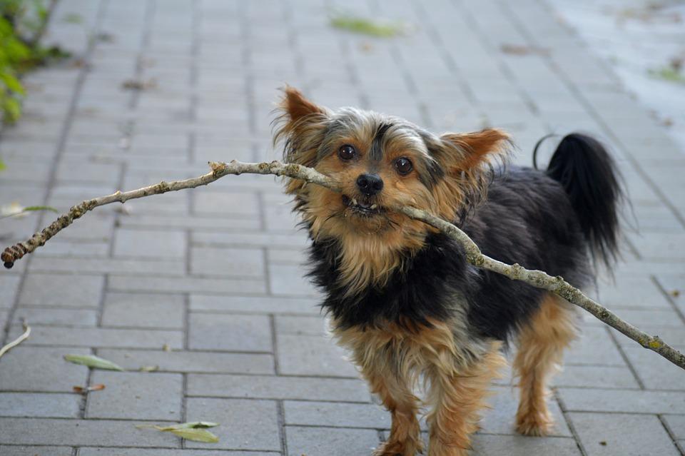 Чем опасен укус клеща у собаки: как бороться, опасные болезни
