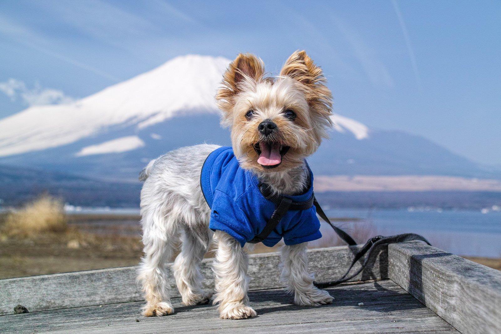 Почему появилась одышка у собаки