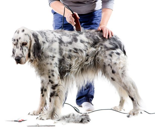 машинки для стрижки собак