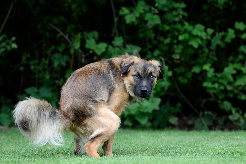 Понос у собаки. Причины и лечение диареи с собак. Что делать и как лечить понос у собаки?