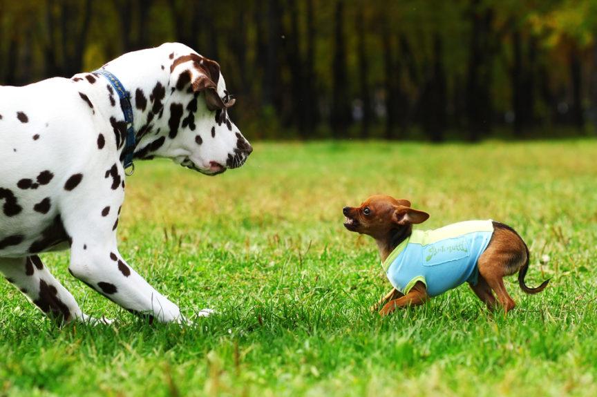 Собака ревнует. Cобака ревнует к другой собаке? Что нужно делать или как бороться с ревностью?