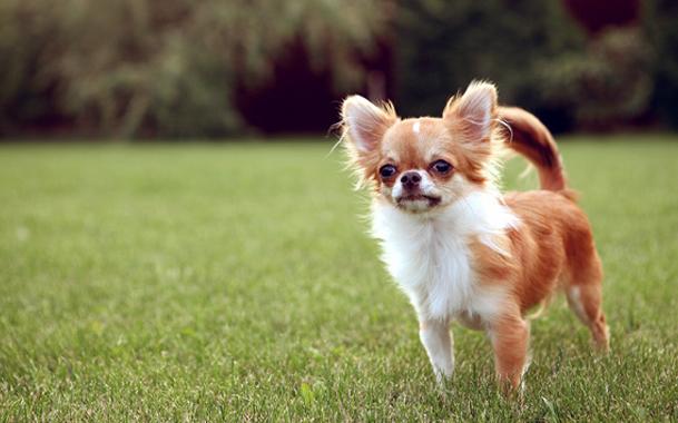 лоток для мелких собак