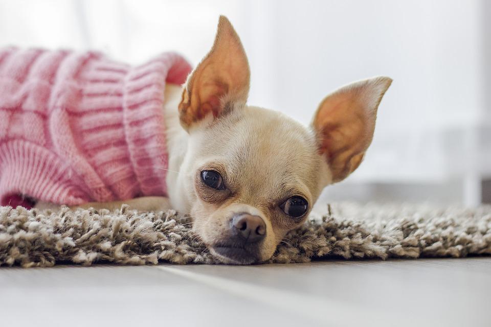 Что может быть если у собаки отекли и чешутся глаза
